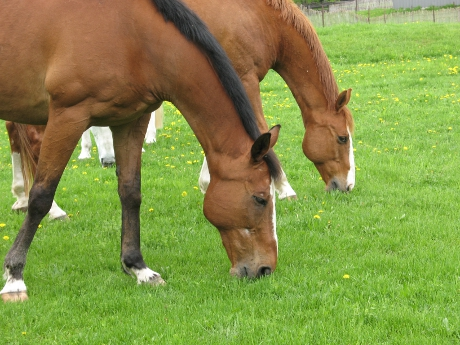 Close-up of two horses grazing near the trail